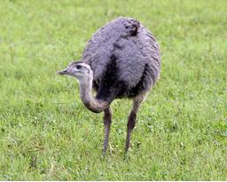 El cinismo del avestruz